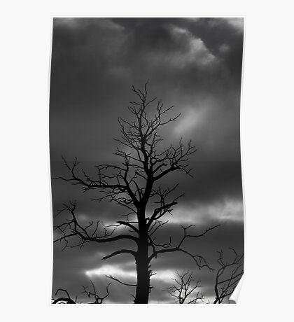 Drama Tree  Poster