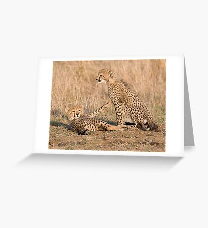 Wait Just One Minute ! Greeting Card