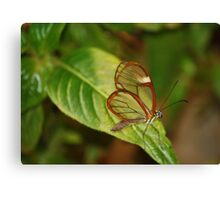 Glasswing Butterfly (Costa Rican) Canvas Print