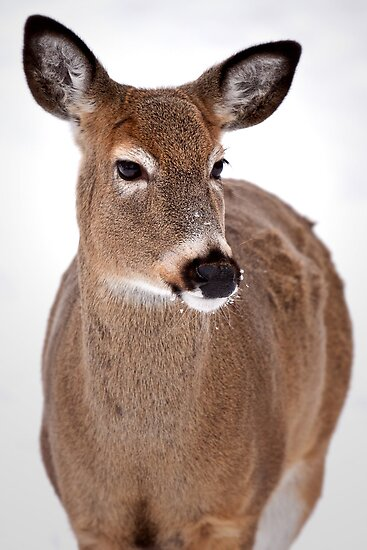 Doe A Deer... by Scott Denny