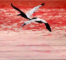 Migration by Robin Webster