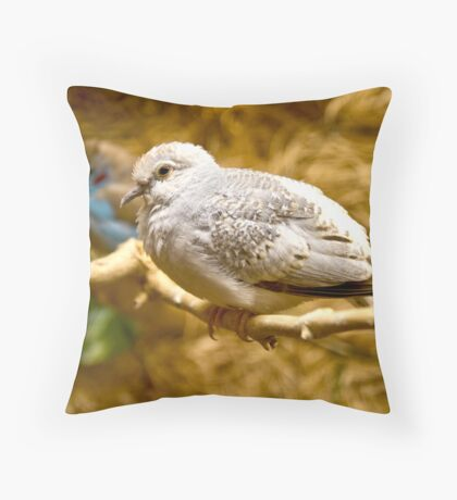 Baby Diamond Dove Throw Pillow