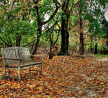 Have a Seat and Relax.... by laurie13