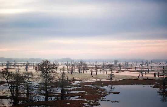 View from Atchafalaya Basin Bridge by Bonnie T.  Barry