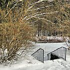 Winter at the Nature Center by Monnie Ryan