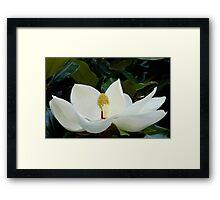Magnolia.... Framed Print