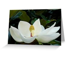 Magnolia.... Greeting Card