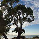 Eucalyptus , Sunrise, Inverloch, Victoria. by johnrf