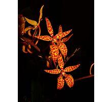 Renanthera monachica Photographic Print