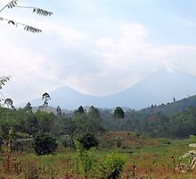 Volcanos National Park Rwanda, East Africa  by Carole-Anne