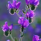 Tiers of Purple by Liz Worth