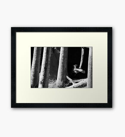 mysterious chimp Framed Print