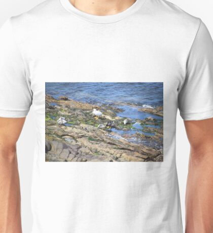 Kelp Goose Family Falkland Islands Unisex T-Shirt