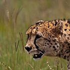 Stalking by Gideon van Zyl