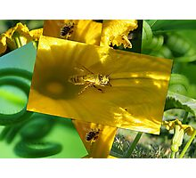 Bees in the Pumpkin Patch Photographic Print