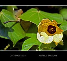 Opening Bloom - - Posters & More by Maria A. Barnowl
