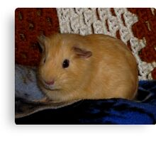 Tanner (My Pet Guinea Pig) Canvas Print