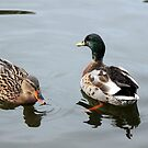 The Mallards  by larry flewers