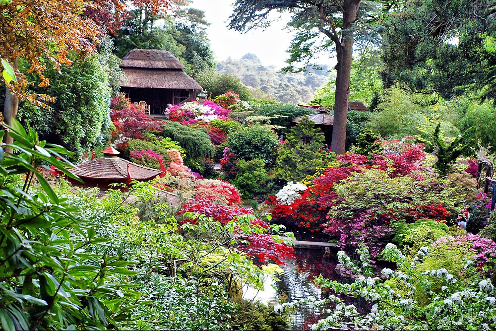 Coloured Garden by Clive