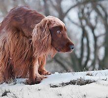 Where' did you go? by (Tallow) Dave  Van de Laar