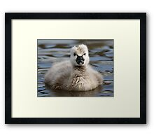 Don't Mess With Me! Framed Print