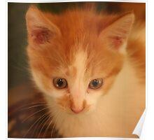 Rescue Kitten Poster