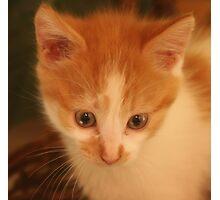 Rescue Kitten Photographic Print