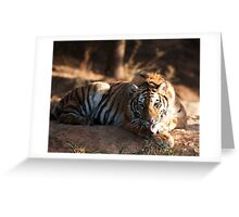 Tiger cleaning himself Greeting Card