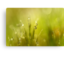 Sunshine Moss Canvas Print