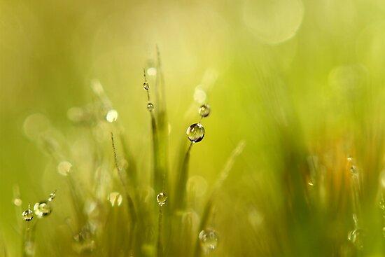 Sunshine Moss by Sharon Johnstone