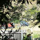 Over the Back Fence 3, Lilydale, Tasmania by RainbowWomanTas