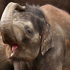 Baby Elephant by Mark Hughes