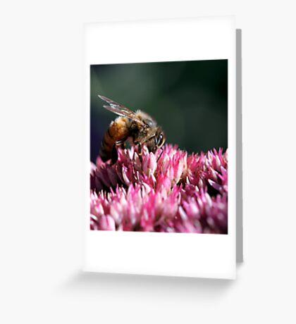 Honeybee on Common Milkweed Greeting Card
