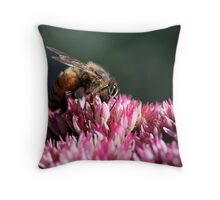 Honeybee on Common Milkweed Throw Pillow