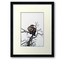 Treetop Framed Print