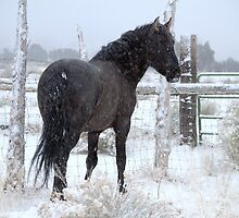 Wisdom ~ In A Blizzard  by Jeanne  Nations