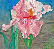 Pink Iris 2 by imokru3