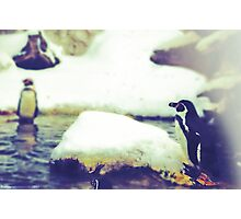 Pinguin Day 1 - Lonesome Photographic Print