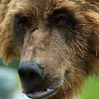 Grizzly mood by Luann wilslef