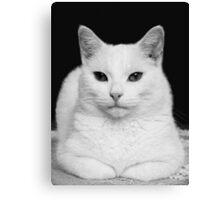 Feline Study Canvas Print