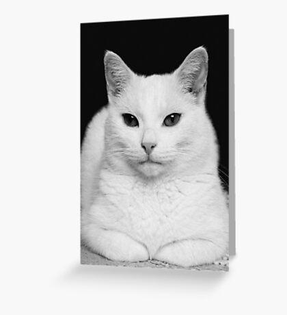 Feline Study Greeting Card