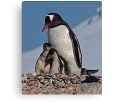 Gentoo Greetings from Antarctica Canvas Print