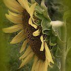 Remembering Sunshine by DottieDees