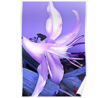 blue tinted lily Poster