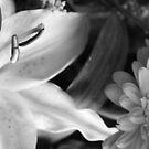 lily and daisy b/w style by xxnatbxx