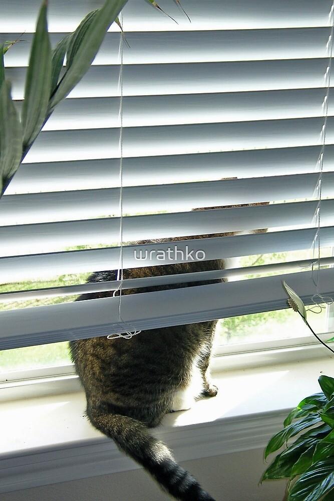 Curious Cat, Sneaking a Peek by wrathko
