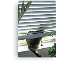 Curious Cat, Sneaking a Peek Canvas Print