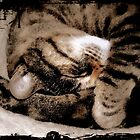 Sleeping Tabby by Karen Martin IPA
