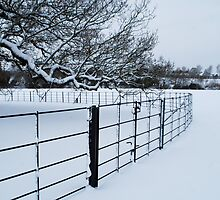 Cold Fence by Karen Martin