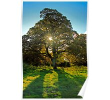 A Tree Poster